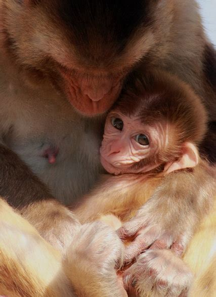 In a Mother's Milk, Nutrients, and a Message, Too - The