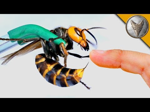 How to Avoid Insect Stings | DIY Network Blog: Made + Remade | DIY